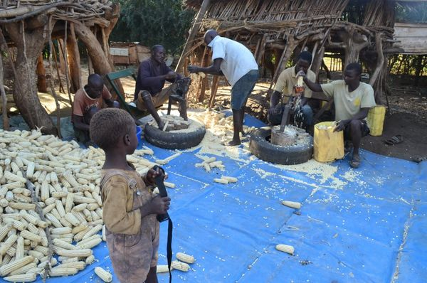 Waste Less Food - many days are spent dehusking the maize