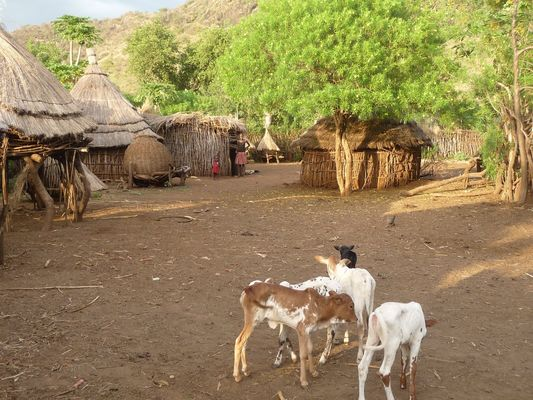 Waste Less Food - A traditional Namalu homestead